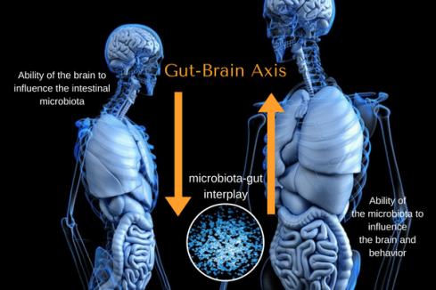 gut-brain (1)