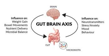 gut-brain-axis